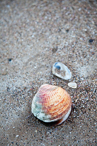 sand and shell background