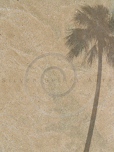 palm tree shadow on sand background