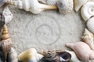 seashells framing sand