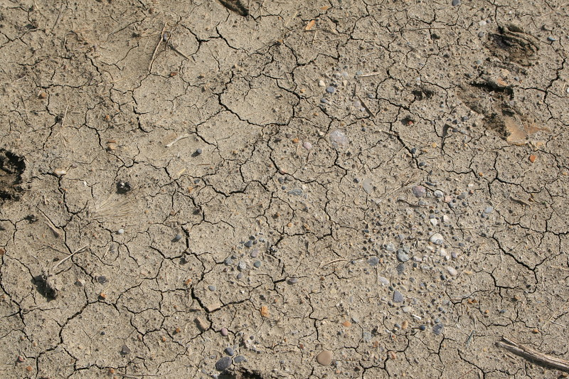 dried mud with cracks and pebbles