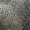Elephant hide texture