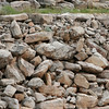 Pine of rocks in Montana