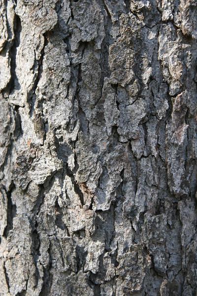 Gray tree bark texture in vertical format