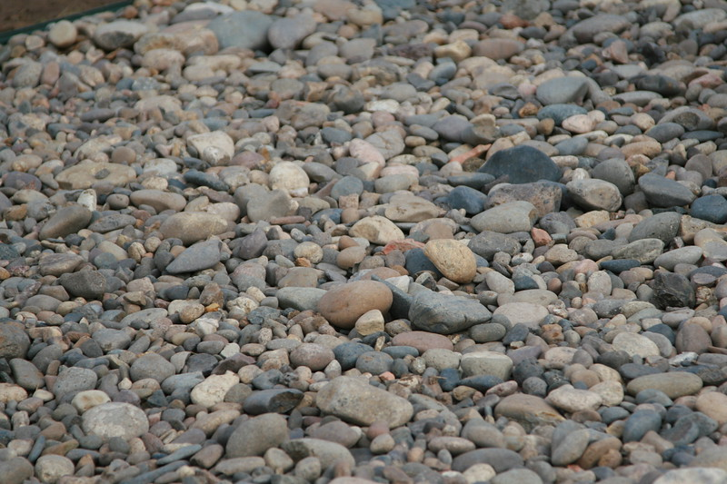 multicolored, multisized smooth pebbles