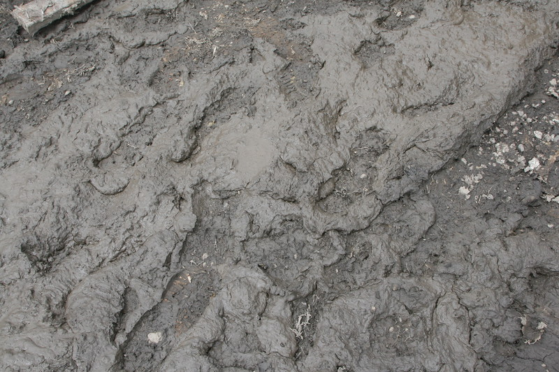 Dried gray mud texture