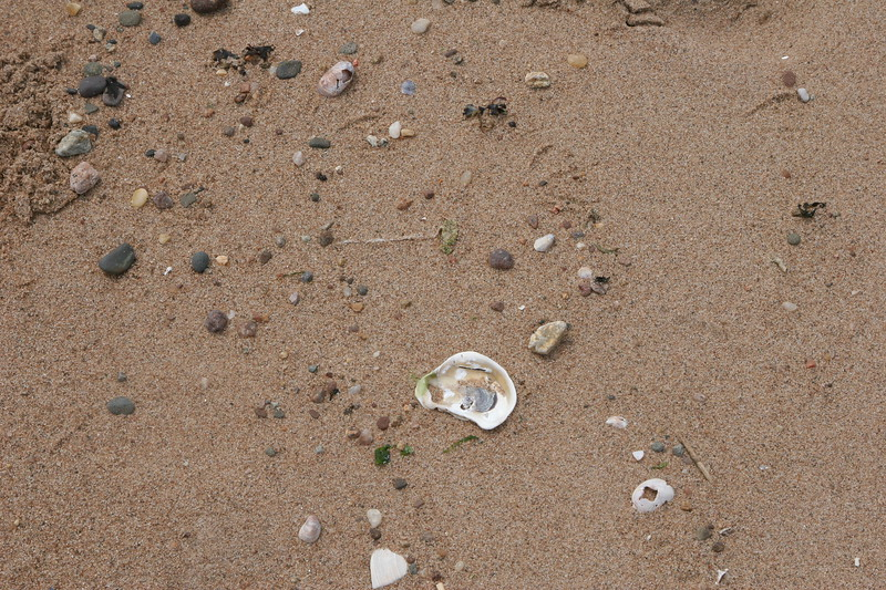 Sand and seashells on Connecticut shore