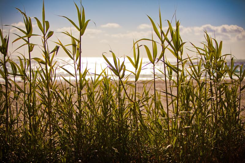Salt Creek Beach, Dana Point, CA