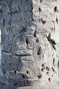 palm tree bark
