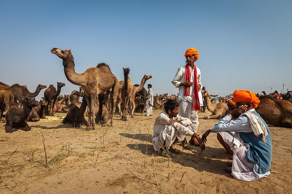 Men in Rajasthani dress and camels at Pushkar Mela (Camel Fair) in Pushar. Pushkar, Rajasthan, India