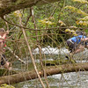 Mere dayhikers crossing Slickrock Creek.