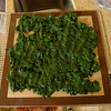 At home before the trip I prepare several bags of cooked organic spinach for the home dehydrator.