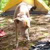 Sterling the Ukraine backpacking dog smells spam.