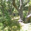 Grassy Gap meets Wolf Ridge part 2.