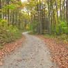 My forest roadwalk to Betty Gap.