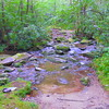 I reach the Sassafras Creek crossing on the Snowbird Creek trail.