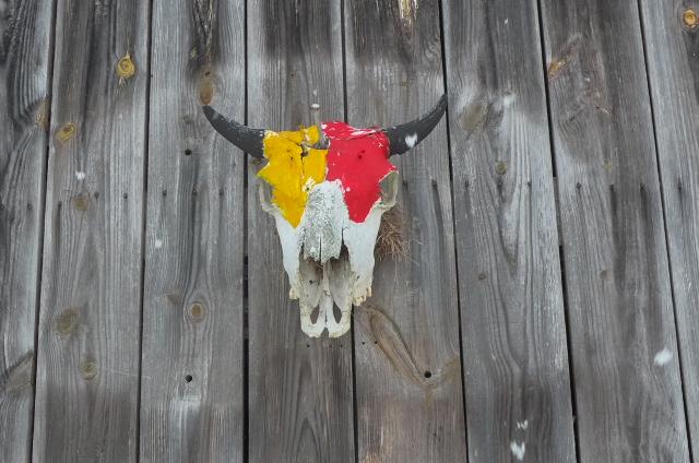 Buffalo skull overlooking the yard.