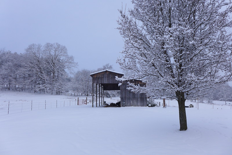Early morning white light in the snow with the barn.