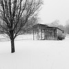 A pretty monochrome shot of the barn and the tree and the snow.