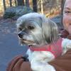 Zoe dog and Mitten.