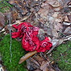 A lost bandana on the trail.
