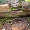 On Leg 6 I reach the log step up and over the notched blowdown.