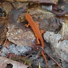 Day 2 sees a newt.