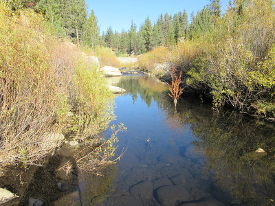 Alpine/Mountaineer Creek (at Sagebrush Gulch)(6,085); Golden Trout Wilderness, Sequoia National Forest, October 22, 2015