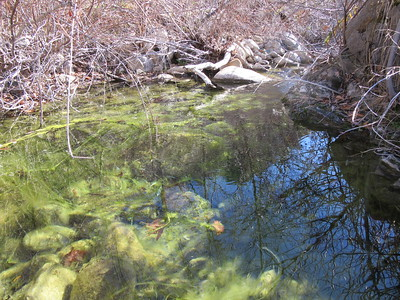 Manzana Creek (near Rays Camp)(2,400); San Rafael Wilderness, Los Padres National Forest, January 1, 2015.