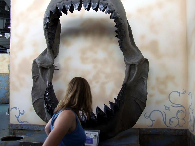 Megalodon Prehistoric Shark.