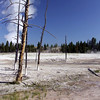 The Land is under constant change, when new geysers pop up the trees in the area die due to the boiling water, acids, and silica in the soil.