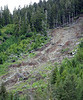 Landslide<br /> Large-swatch clearcut logging on these steep slopes causes frequent landslides, often years after the logging has stopped and second-growth has started taking plant.  The mature roots of old-growth trees help anchor the ground in these hills.  Once the roots of old stumps rot, the ground becomes unstable and is prone to such erosion, especially during winter storms.