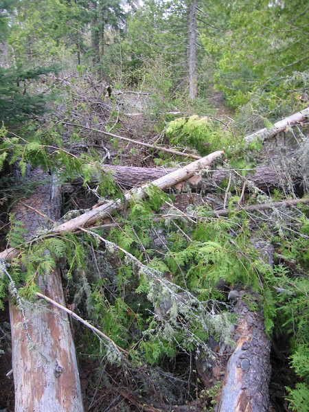 Day 6: The Border Route trail is minimally maintained (if at all?). I frequently had to decide whether to go over, under, or around downed trees.