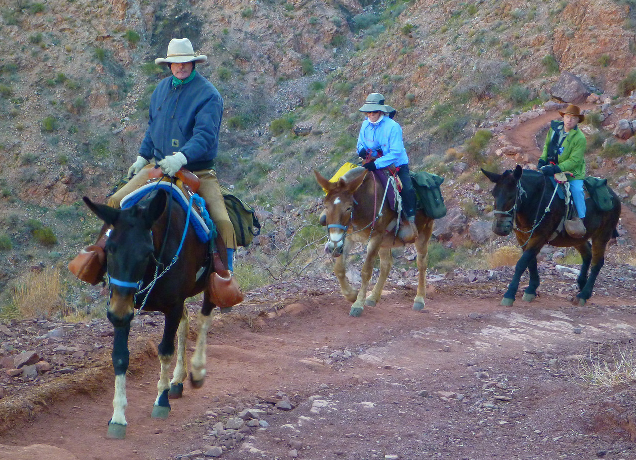 Day 6 - Hiking back to the South Rim via the South Kaibab Trail. Riders going up.