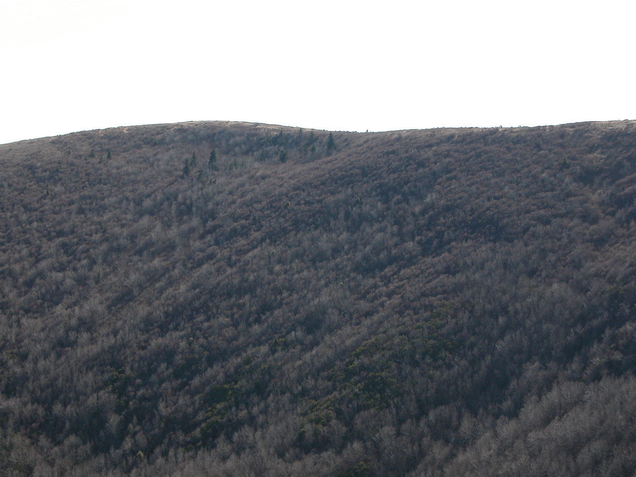 another part of failed attempt at producing a pano from the summit of Tennent