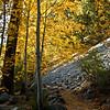 Ice House Canyon in the fall - amazing!