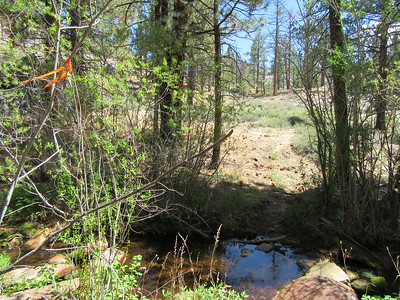 At this crossing of a tributary to Manter Creek there was flagging placed by the LPFA volunteers last June when they worked the trail; the flagging soon became even more useful.