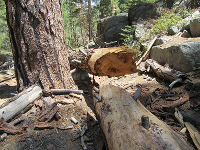 A short distance farther was this larger and messier blowdown ...
