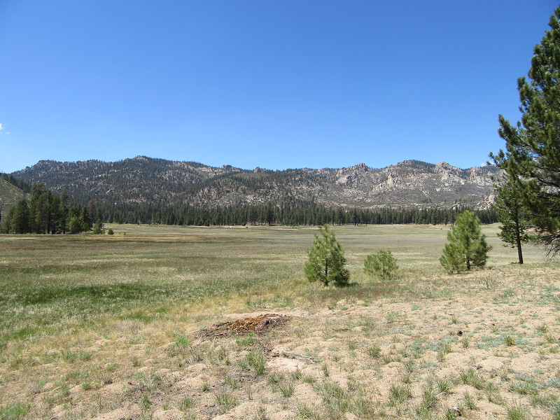 I continued along the east side of Manter Meadow on the Woodpecker Trail until ...