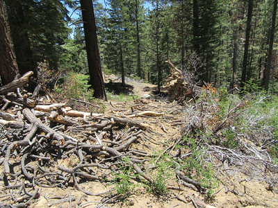 As I headed down toward Manter Meadow, there were a few blowdowns across the trail in the thickly forested area.