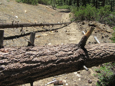 This, and other photos of blowdowns across the trail, will be included in my customary trail report to the Forest Service to help with trail maintenance.