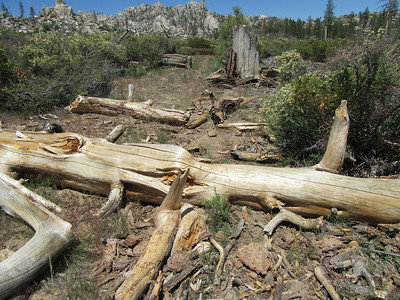 This was the first blowdown as I hike around the north end of Manter Meadow, ...