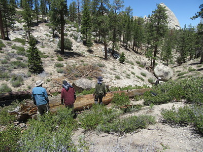 ... found some of the trail crew trying to remove a blowdown that had fallen on a long section of trail.