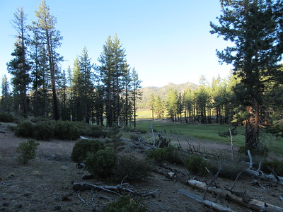 Early on my first morning there, I took a walk south along the east side of Manter Meadow, ...