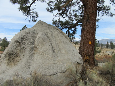 While exploring around the area I came upon this boulder, tree and sign.  Well, ...