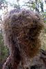 head shape moss...odd is it?