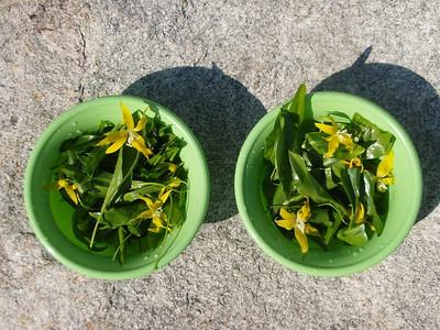 Glacier Lily Salad, Yummie!!