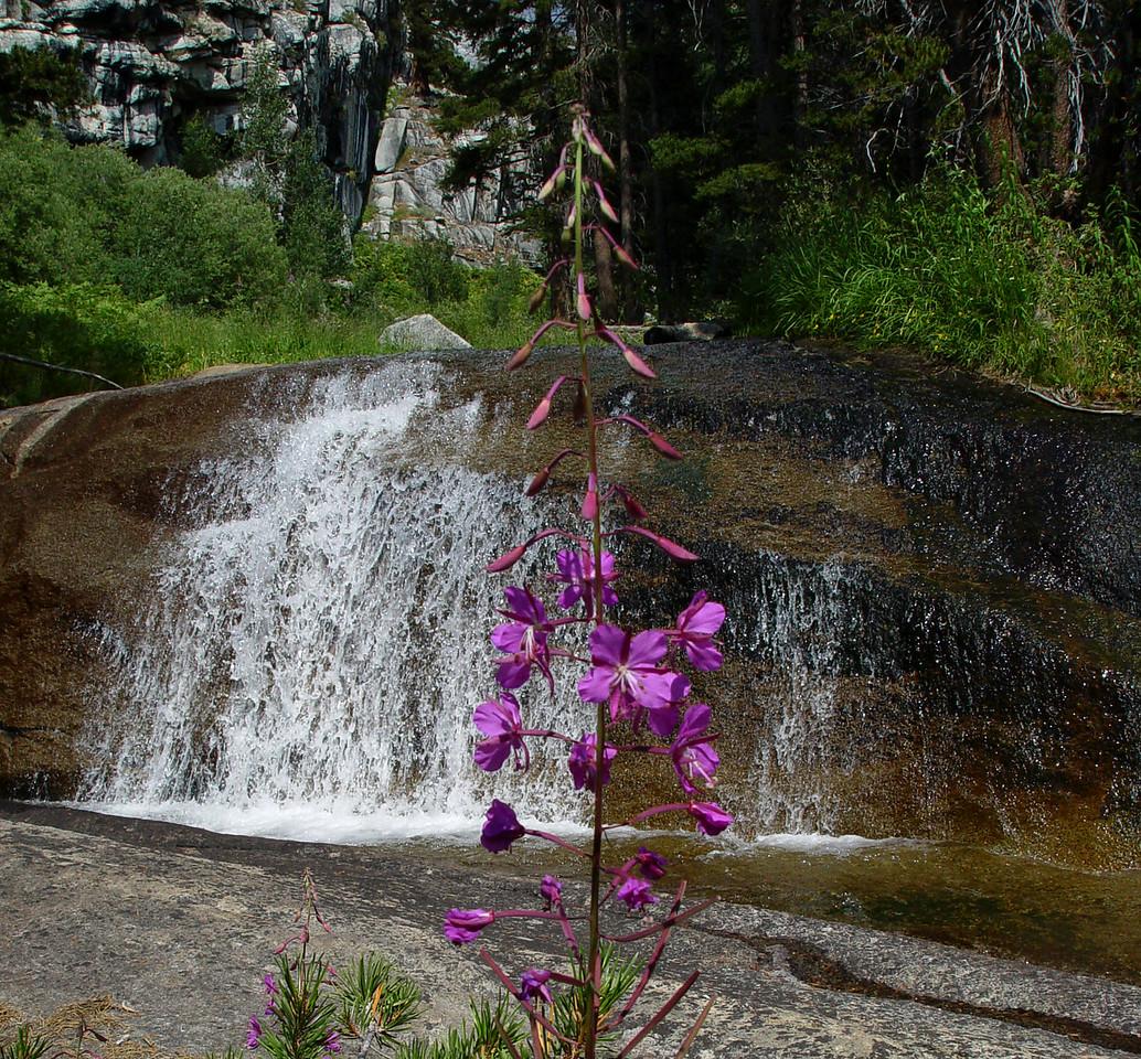 Fireweed Falls