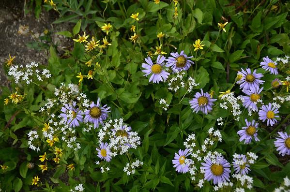 Wild Flower Groupings
