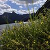 Wildflowers - Elizabeth Lake