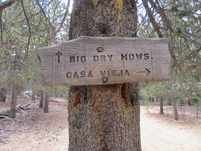I continued south toward Big Dry Meadow and found this trail sign for another trail looping back to Casa Vieja Meadows which is not on the 2015 Harrison map, but is on the 2010 Forest Service map.  A fast inspection showed me that it is overgrown, but can be found for at least a little way.